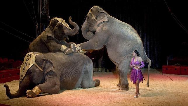 Elefantes durante un número circense en Sevilla
