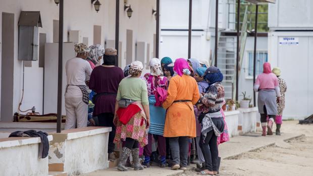 Un grupo de temporeras de nacionalidad marroquí en una finca de Huelva