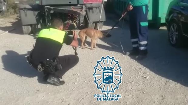 Captura de los canes en el polígono de Málaga