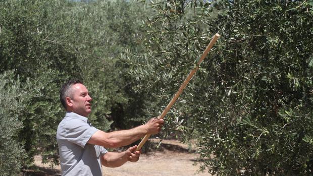 Un agricultor en una finca de olivos en Priego de Córdoba