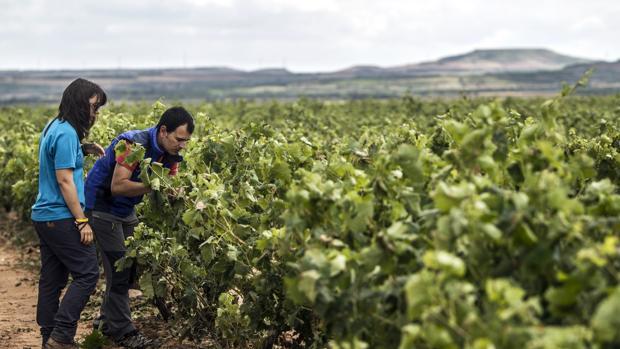Dos jóvenes realizando labores agrícolas