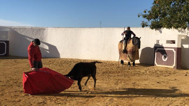 El diestro Jesulín de Ubrique, tentando una vaca en el Cortijo de la Sierra