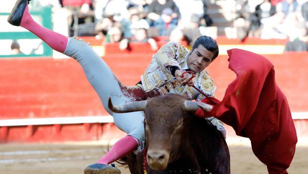 El novillero mexicano Diego San Román sufrió una cornada en el gemelo