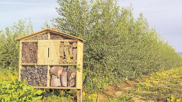 Una de las instalaciones dedicadas a albergar los insectos