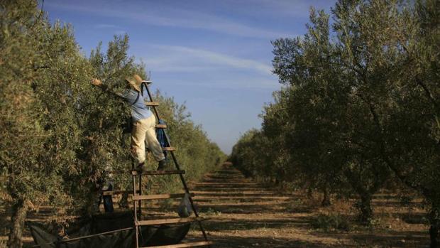 UPA: «Si la cosecha es mejor, en vez de alegrarnos, nos perjudica»