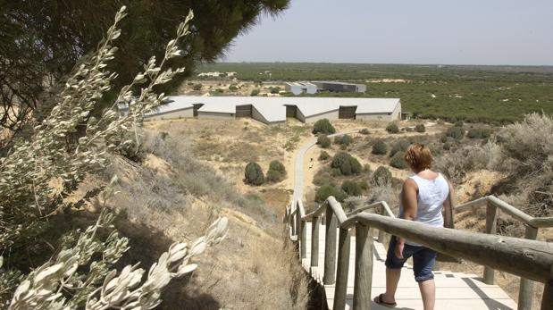 Paseo del Parque Dunar en Matalascañas
