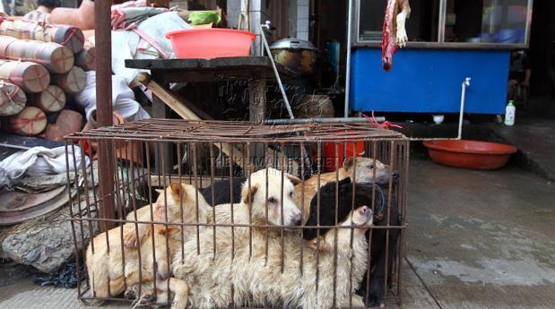 Festival de la carne de perro de Yulin: tres historias con un final feliz