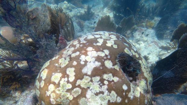 Resuelven una «incógnita desconocida» hasta ahora sobre cómo afectan las olas de calor a los arrecifes