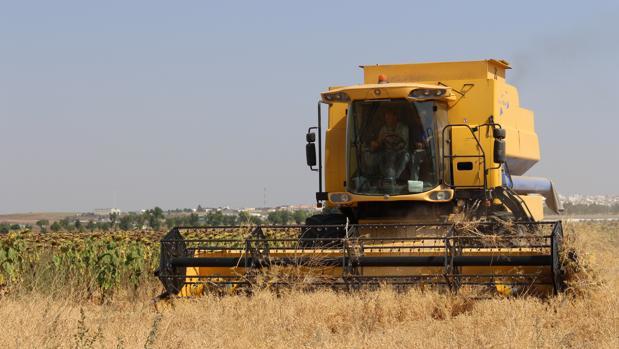 El campo fontaniego se encuetra en julio en plena campaña de recolección