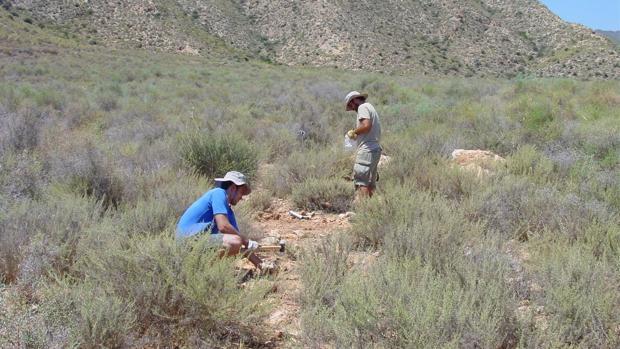 El equipo de investigadores ha analizado suelos situados en casi todos los rincones del globo terráqueo