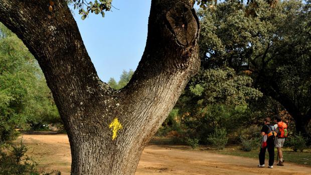 Flecha amarilla que sirve de orientación a los peregrinos del camino de Santiago