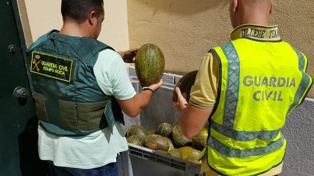 La Guardia Civil ha detenido a siete personas por robar melones en varios municipios de Sevilla