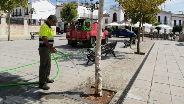 Un operario municipal riega un árbol de Las Navas de la Concepción con el agua de una cuba