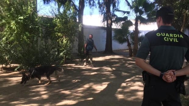 La Guardia Civil ha realizado una importante batida por los principales parques de Utrera