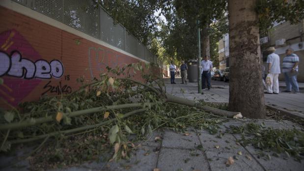 Una rama caída en el barrio de Las Golondrinas, en la Macarena