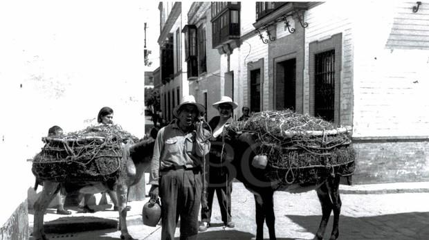 El botijero en Sevilla