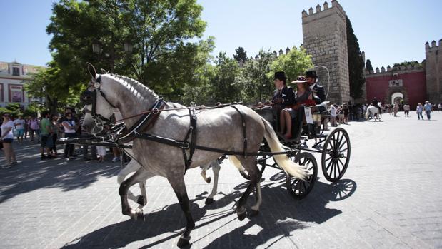 Un coche de caballos en el Centro de la ciudad
